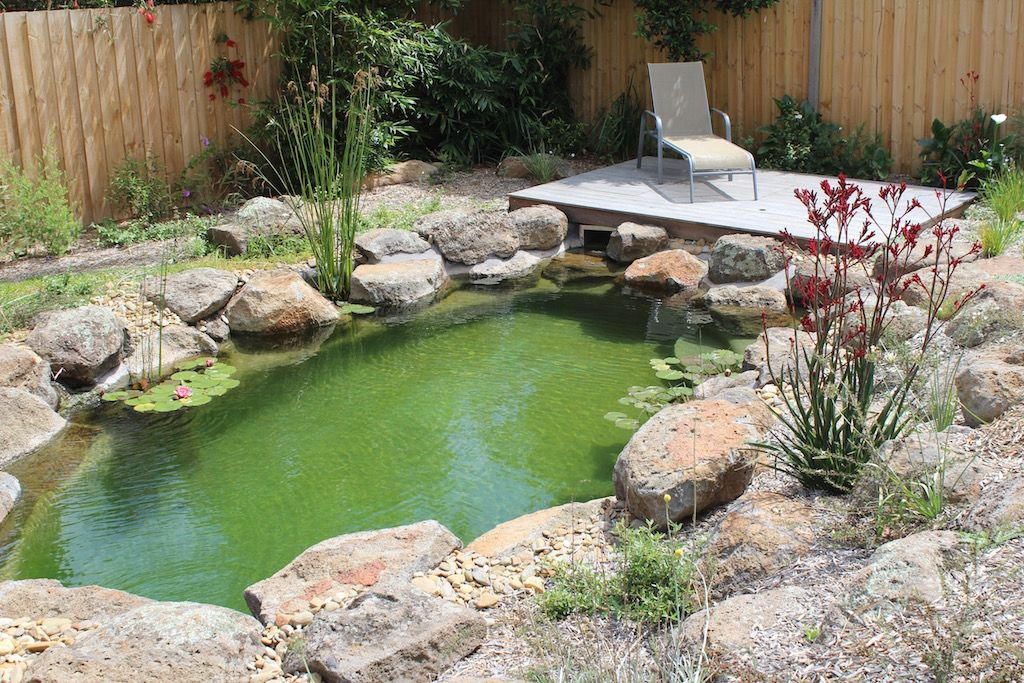 Our Projects Natural Swimming Pools Australia Ponds Pinterest Natural Swimming Pools