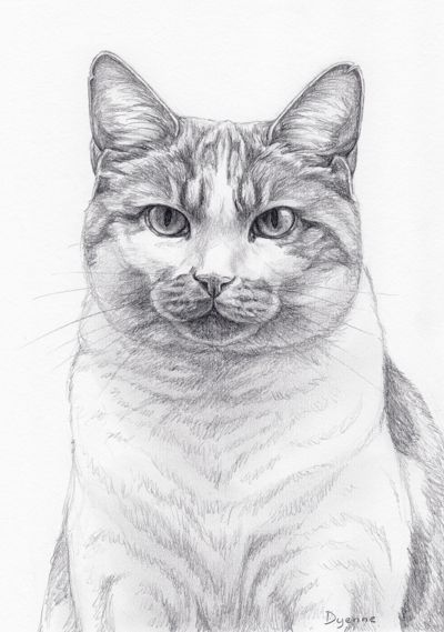 Quatang Gallery- Pin By Cherinalgl70 Brokling On Dieren Cats Art Pencil Cat Art Animal Drawings
