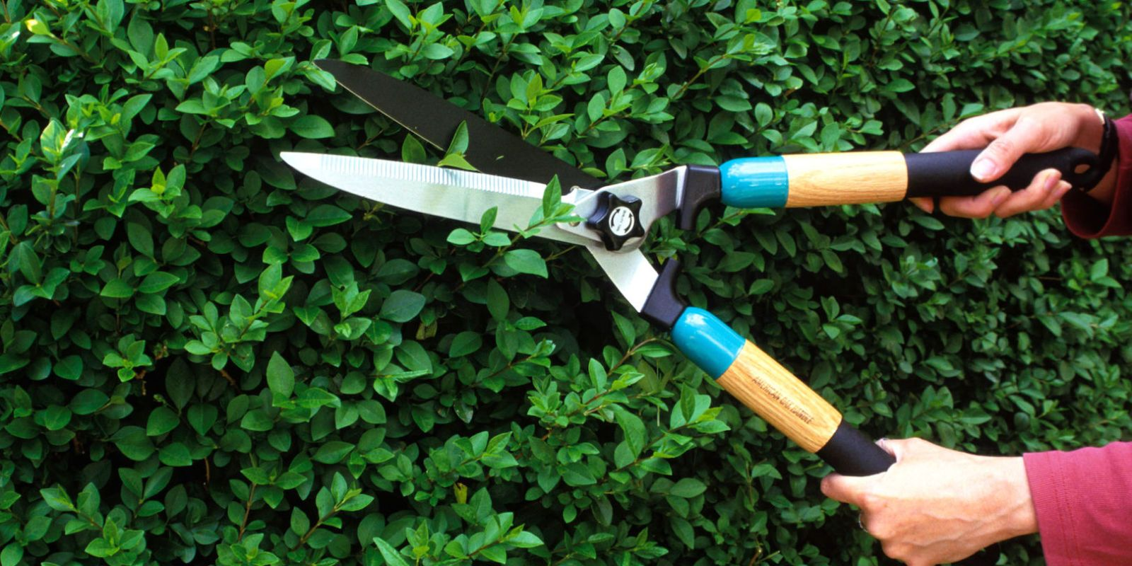 The Essential Guide To Pruning Plants All Year Long Pruning Plants Garden Tools Tree Trimming Service