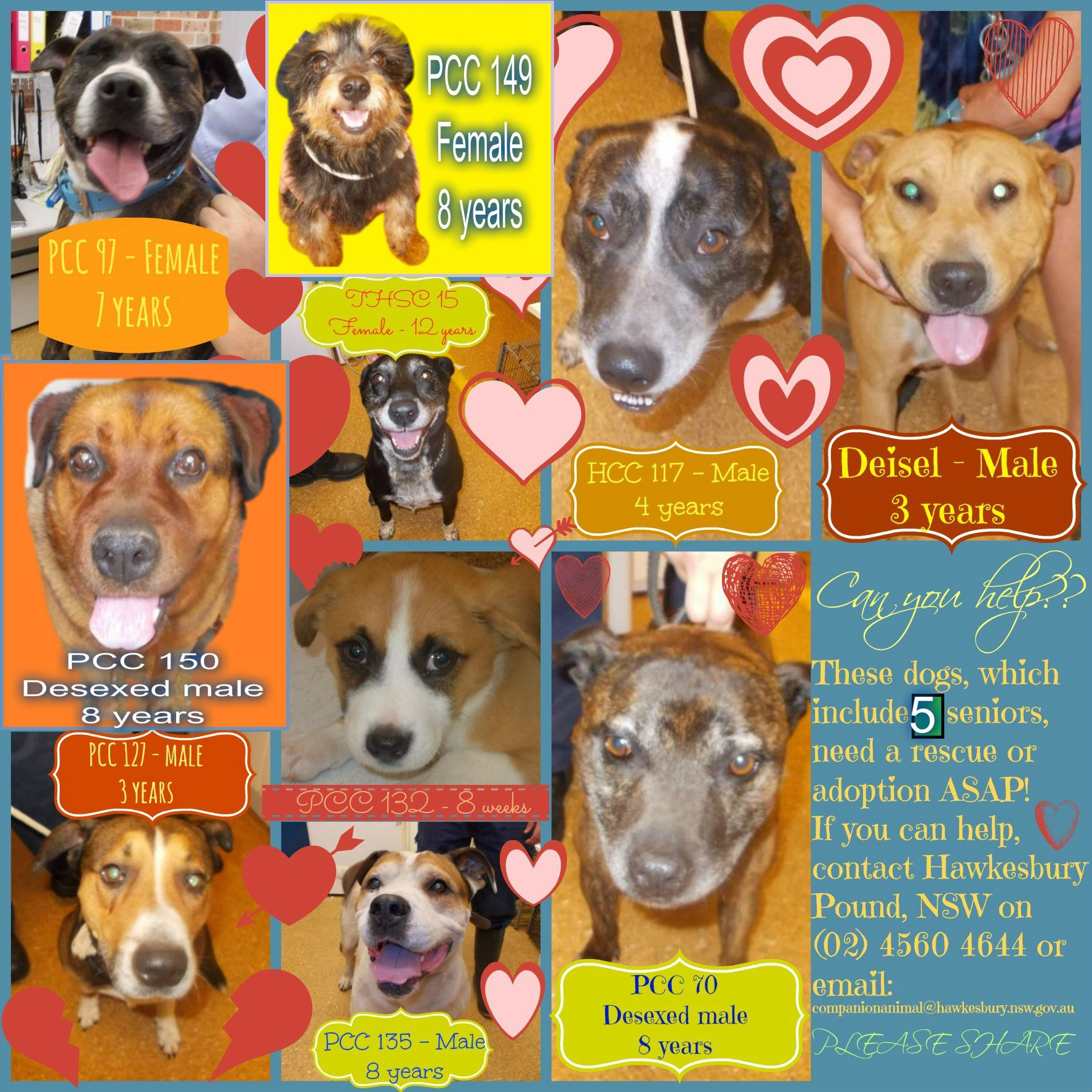 These dogs, which include FIVE seniors, need a rescue or ...