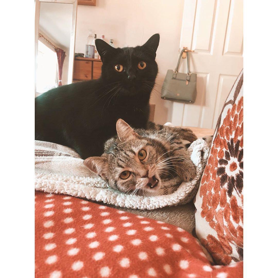 cat names girl cat radiator bed cat 45 pet 9 cat months
