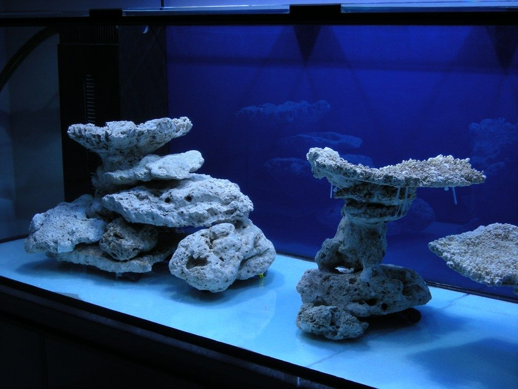 aquascaping marine | Minimalist Aquascaping - Page 31 ...