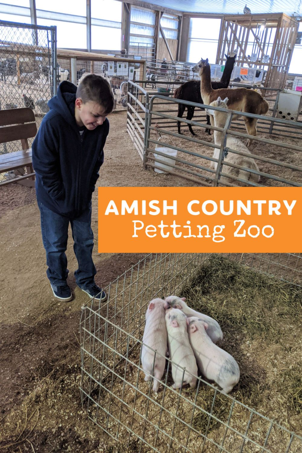 Kid Favorite Hershberger's Farm Petting Zoo