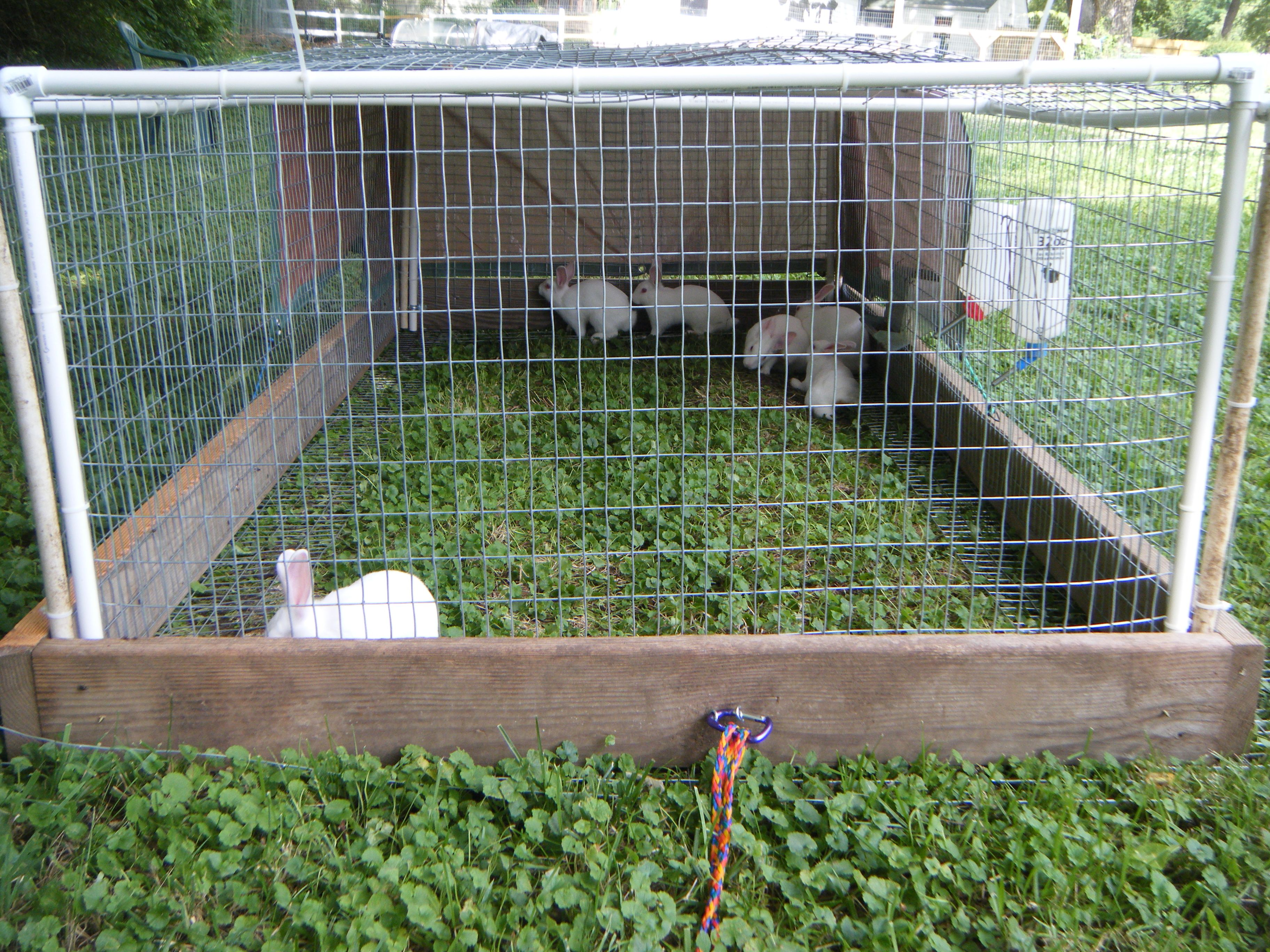 Living Lawn Mowers In Their Rabbit Tractor It Needs To Be Moved A