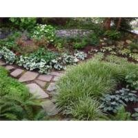 shady garden ideas gardening chronicles replace a shady lawn garden in autumn