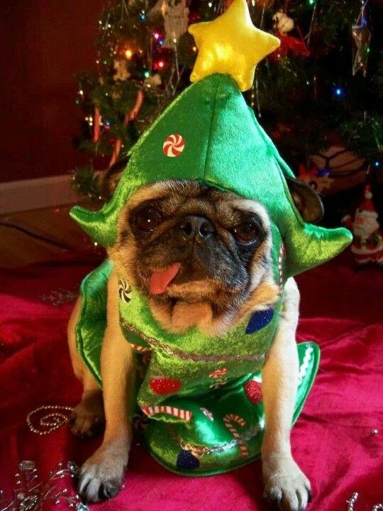 A Cute Christmas Pug Tree Pug Love Pinterest Natal
