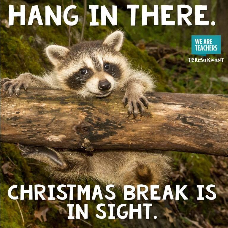 18 Hilarious Winter Break Memes Only A Teacher Will Understand Teacher Memes Funny Teacher Jokes Teacher Memes