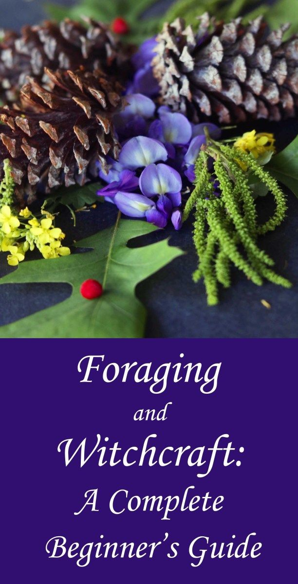 Foraging for Witchcraft: A Beginner's Guide - Moody Moons #greenwitchcraft