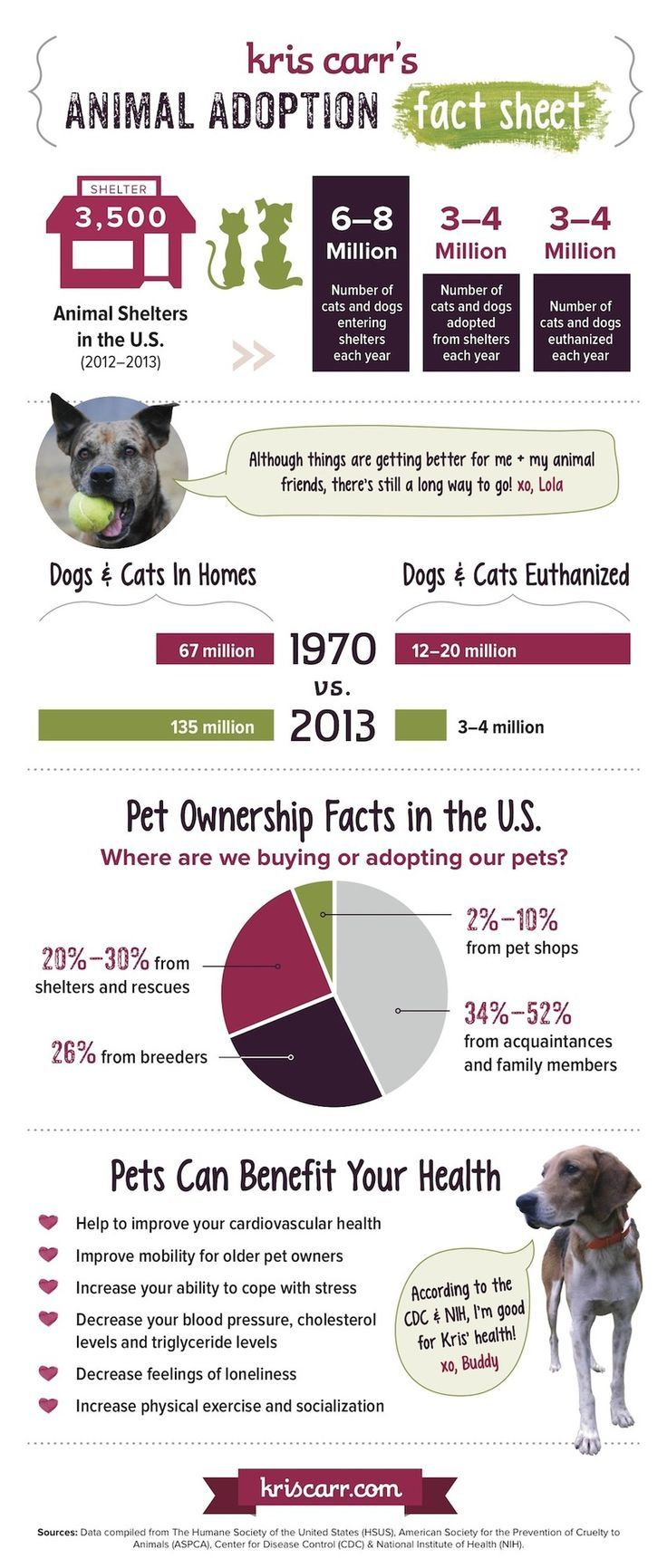 What Everyone Should Know About Animal Adoption