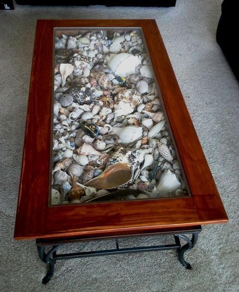 Place My Seashells On Display In A Coffee Table