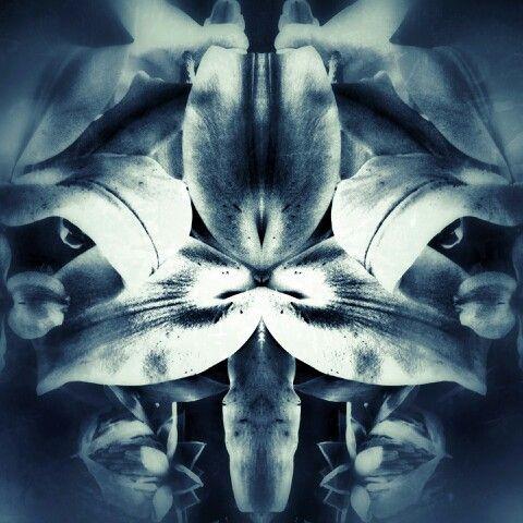Tigerlily symmetry