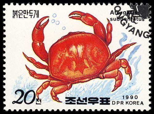 Atergatis subdentatus, Korea, 1990