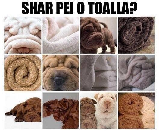 Imagenes Para Reir Memes Chistes Chistesmalos Imagenesgraciosas Humor Funny Animal Pictures Funny Animals Food Animals