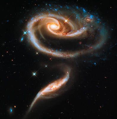 Space Image Galaxy Rose by Matthias Hauser -   13 beauty Images galaxy ideas