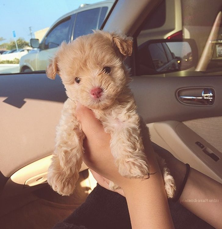 Photo of 25Dog Cross Breeds That Are SoCute You'll Immediately Want aMutt