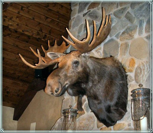 A cabin is not a cabin without a moose head above the mantle home sweet vintage home - Fake stuffed moose head ...