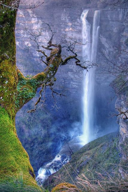 Deep in the forest, a flowing waterscape, a lovely, mossy tree