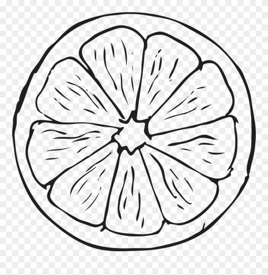 Download Hd Orange Drawing 16 Clipart Of Black And White Half Orange For Coloring Png Download And Use The F Drawings Free Clip Art Clipart Black And White