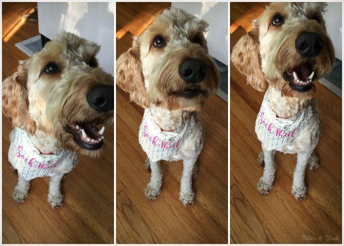 How to Make a Reversible, Personalized Dog Bandana Use