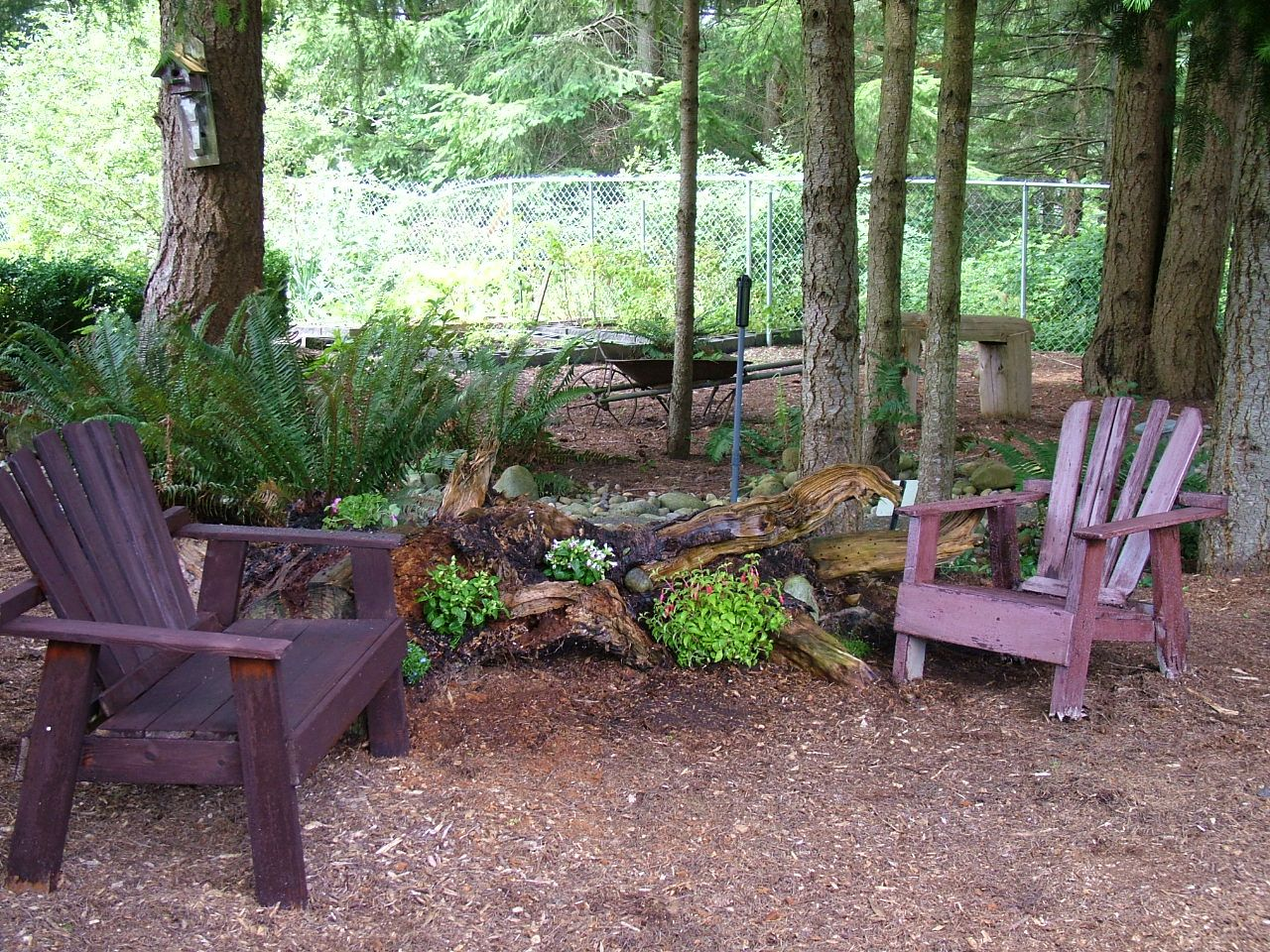 My new woodsy backyard sitting area Old tree roots with flowers