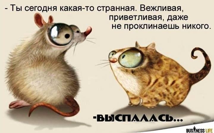 Самые смешные картинки про кошек - прикольные открытки ...