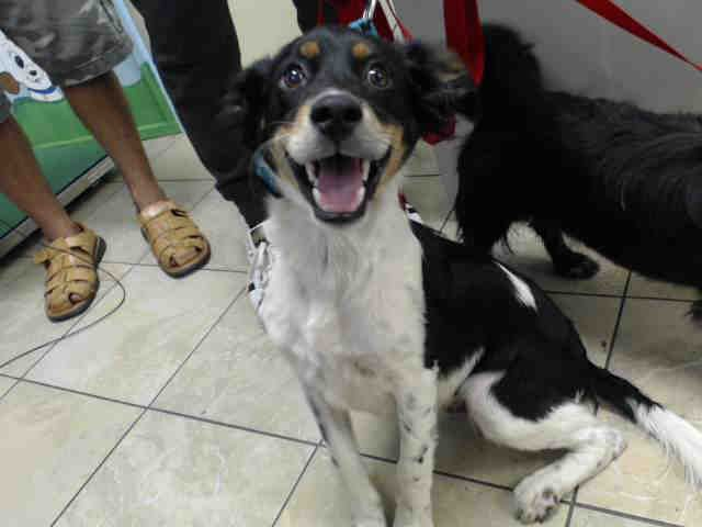 07 13 17 Owner Surrender No Hold Time Required Extremely Urgent Local Foster Needed Houston Oreo Id A488378 My Name Is Oreo I Am A Male Black