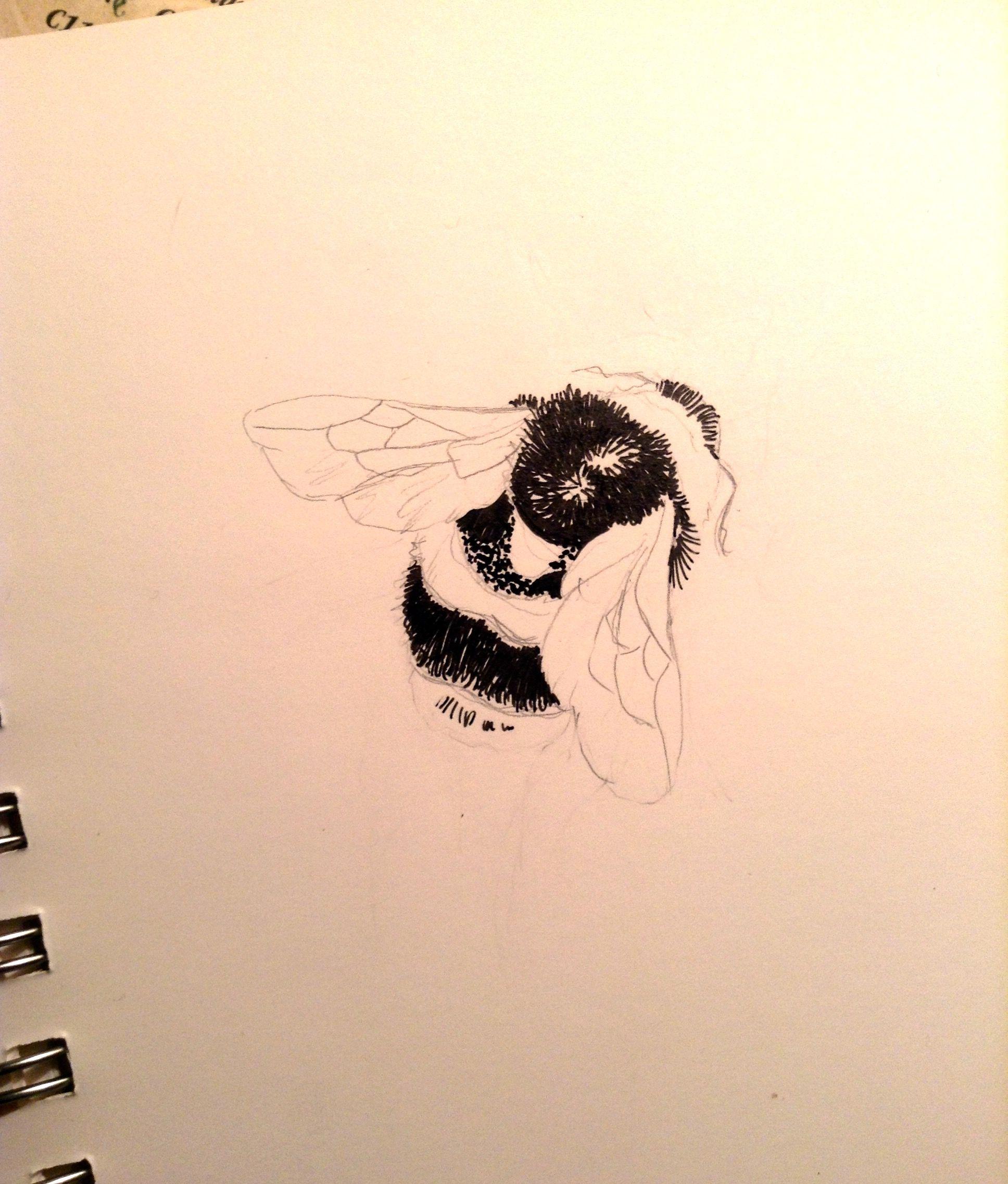 Bumblebee sketch