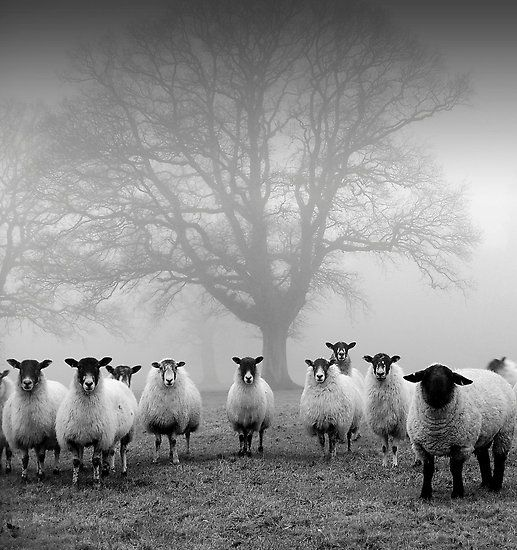"""""""The Tree Guardians"""" photo by John Trent .....from redbubble.com"""