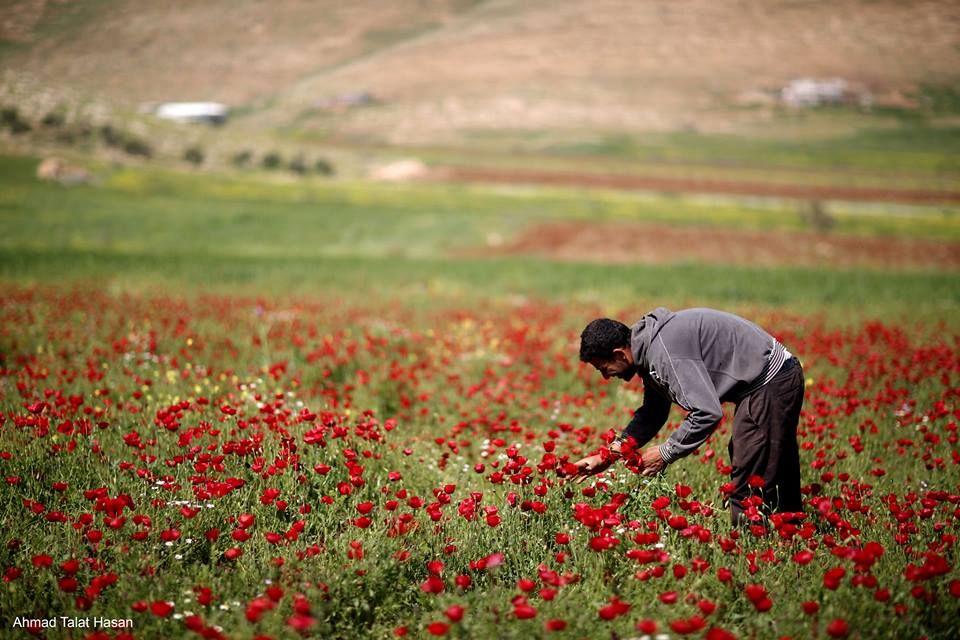 Jenin - Palestine. Peace and Sovereignty for Palestine.