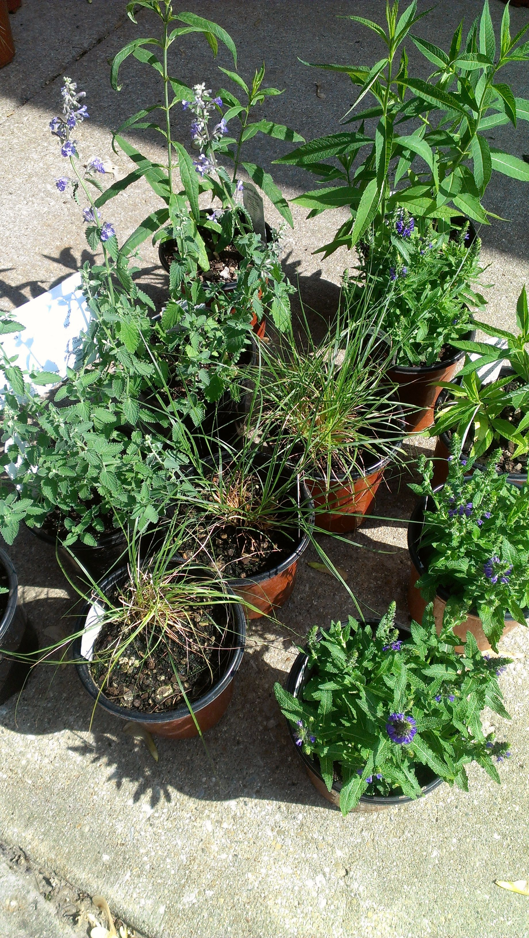 Hcba plant sale prairie godmothers at independence park for Less maintenance plants