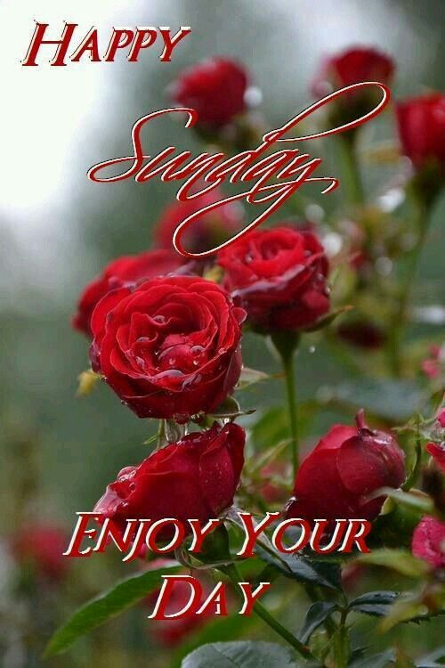 Good Morning Happy Sunday Enjoy Your Day Sister And Allgod Bless