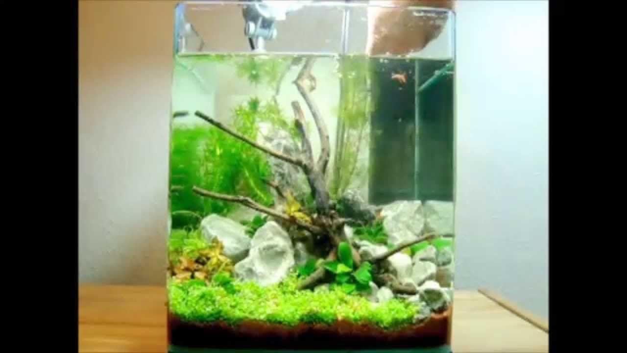 20l dennerle nano cube einrichten 5 gallon nano tank set up shrimp tanks pinterest aquariums. Black Bedroom Furniture Sets. Home Design Ideas