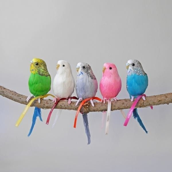 Budgies 18 Liked On Polyvore Featuring Home Decor And Bird