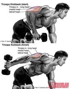 dumbbellkickbackins1  dumbell workout healthy fitness