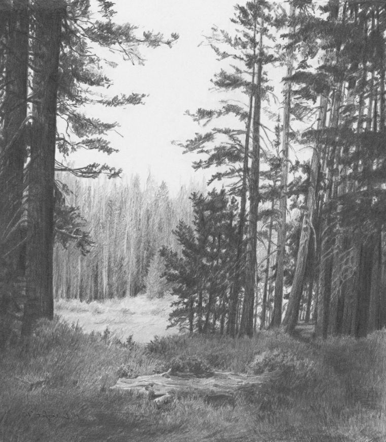 disegni facili da disegnare paesaggio alberi fusto alto