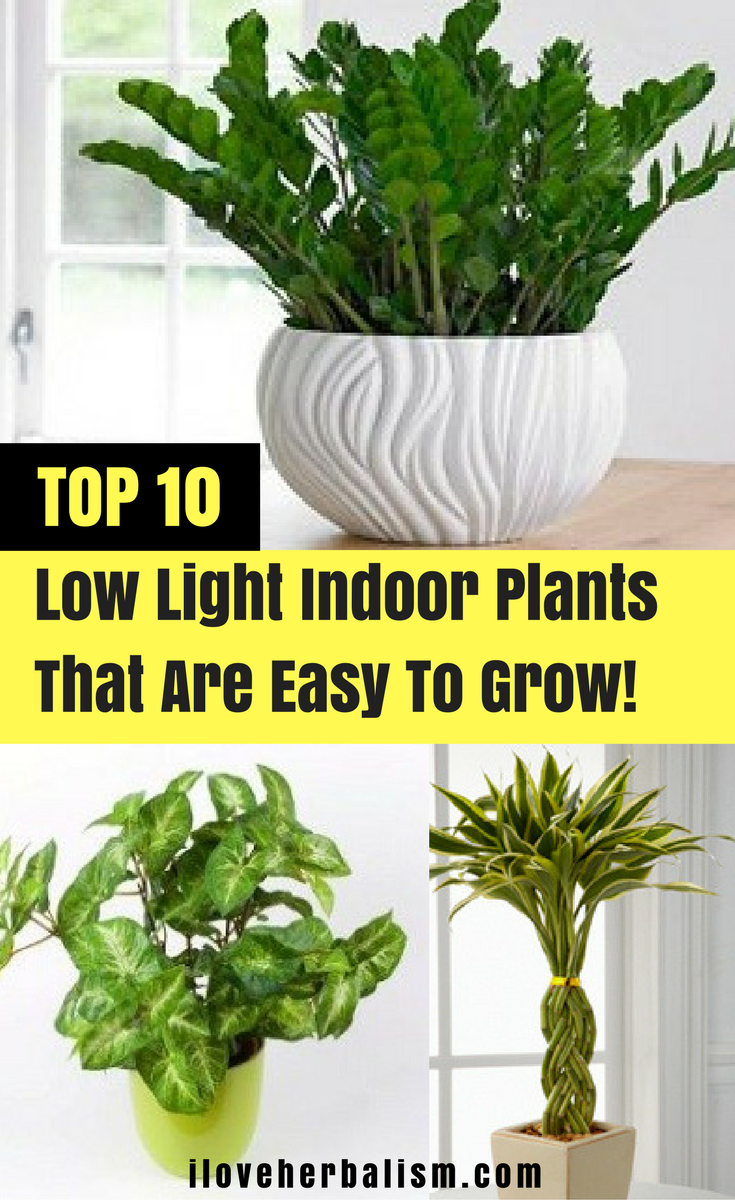 Top 10 Low Light Indoor Plants That Are Easy To Grow