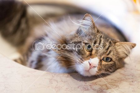 simpatico gatto