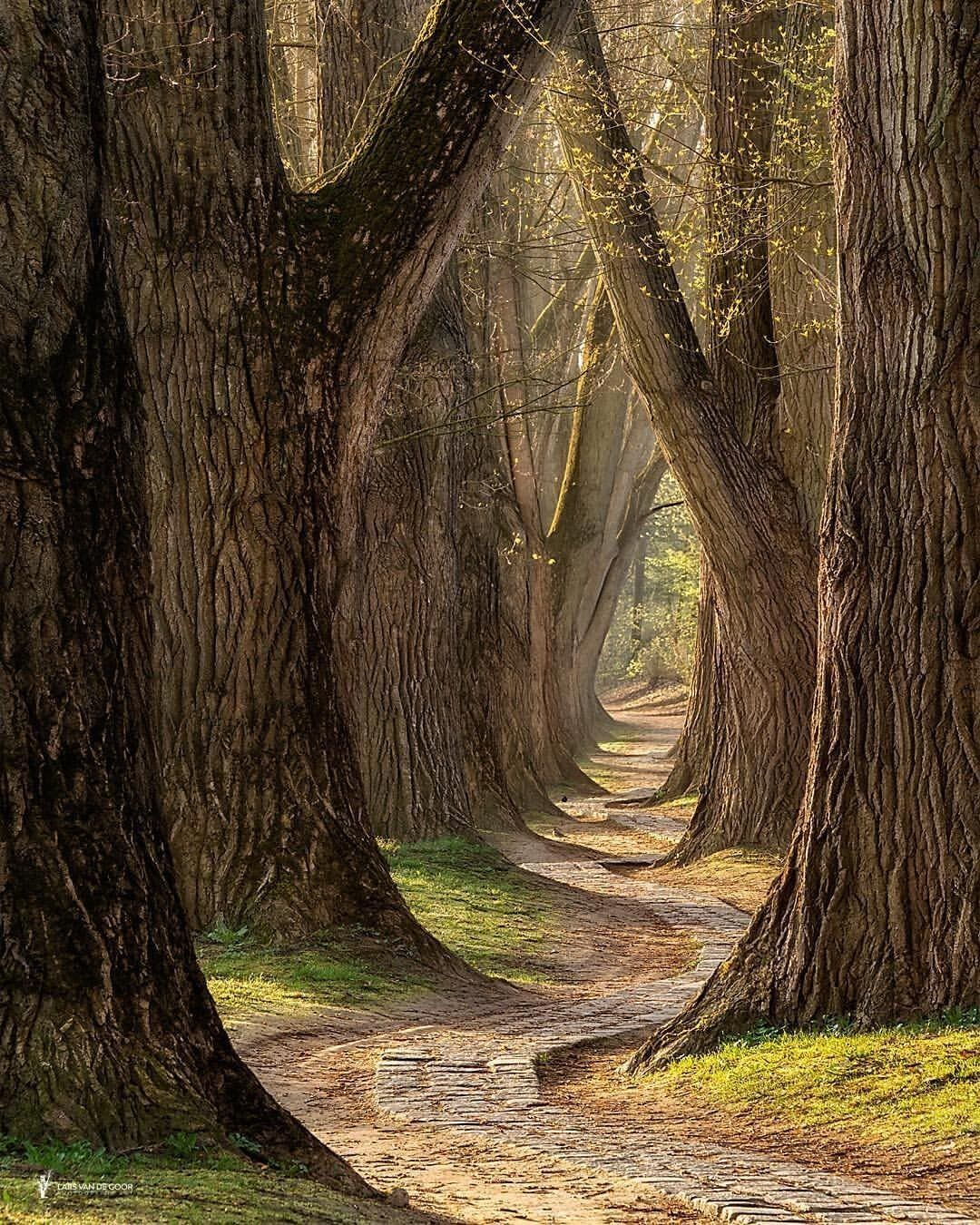 Lovely Pathway To The Enchanted Forest By Larsvandegoor Mystic Nature Outdoor Photography B Nature Photography Trees Nature Photography Beautiful Nature