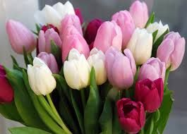 Tulipanes Holandeses Buscar Con Google Tulipanes