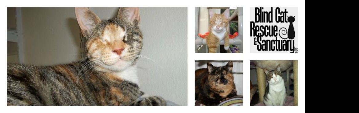 Blind Cat Rescue Cat rescue, Cats, Cute cats