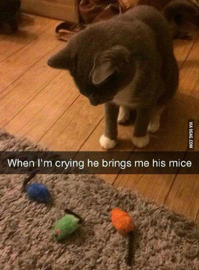 This is why cats are better. Cute animals, Funny animals