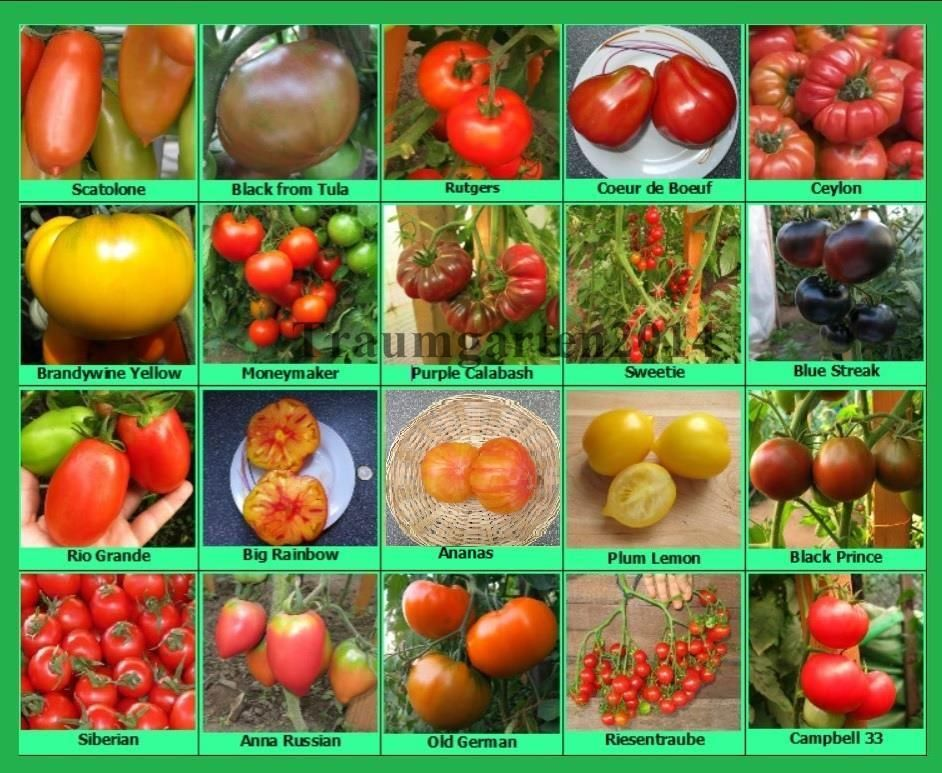 Pin Auf Tomaten