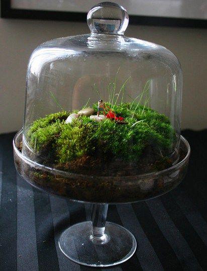 glass cake stand diy terranium