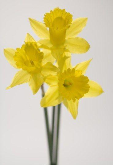 Decryptez Le Langage Des Fleurs Flower Language Pinterest