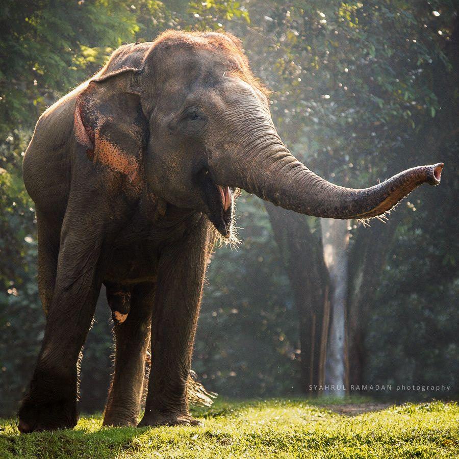 Best 25 elephant background ideas on pinterest elephant - Elephant background iphone ...