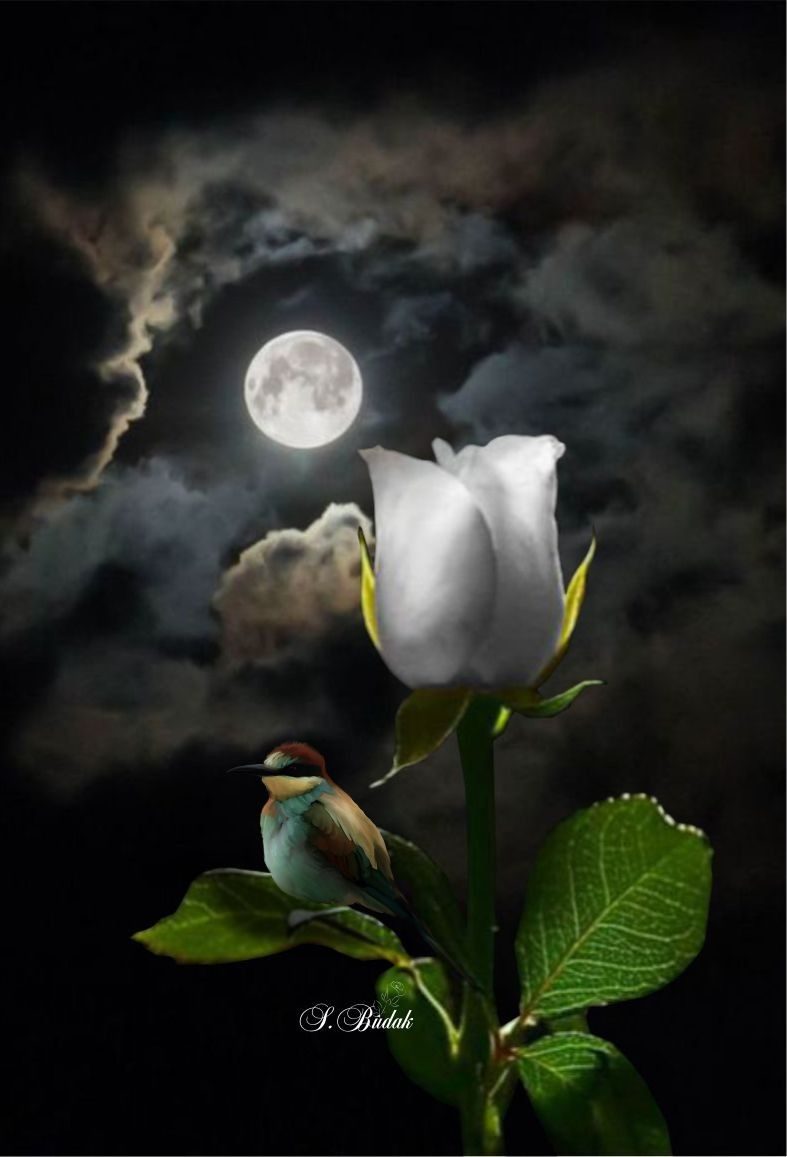 Good Night Days And Nights Pinterest Moon Moonlight And