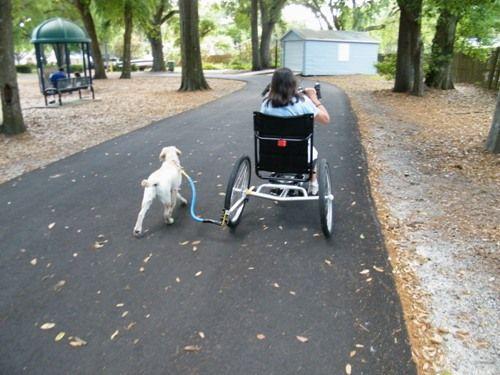 Wheelchair Dog Leash By Bike Tow Leashuniversal Design Style Dog Wheelchair Dog Walking Dog Leash