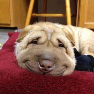 Too cute !!