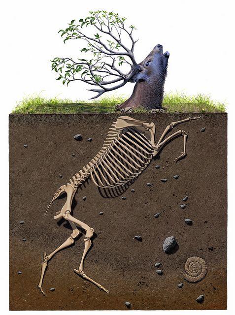 ciervo enterrado