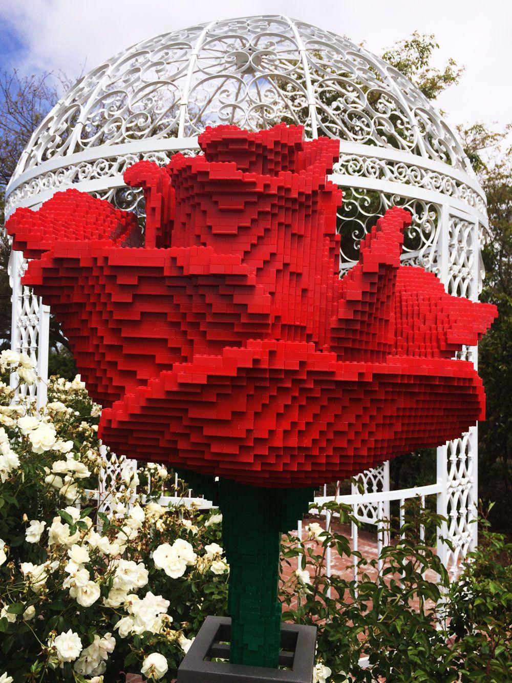 "South Coast Botanic Garden on Instagram ""The Rose Garden"